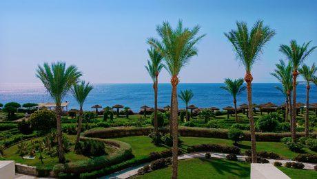 Palmy w egipskim kurorcie