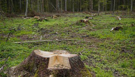 Co dzieje się w polskich lasach? Sprzedaż, wycinka drzew…co jeszcze?