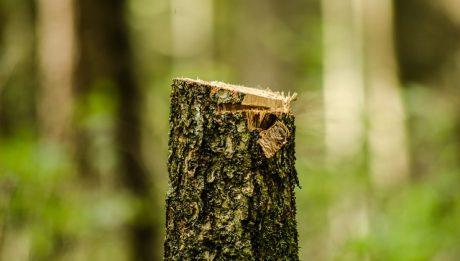 Kary za wycięcie drzew, czy można wyciąć drzewo bez pozwolenia?