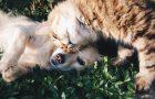 Ubezpieczenie psa i kota – jak działa, kiedy jest możliwe?