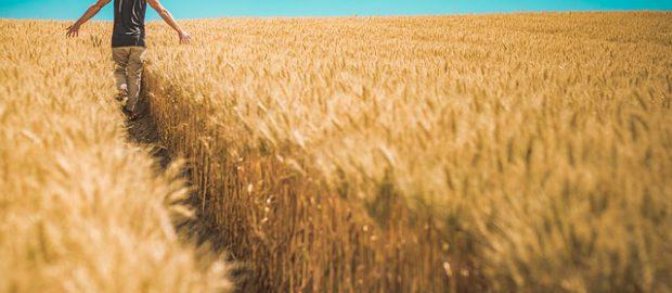 mężczyzna idący przez pole