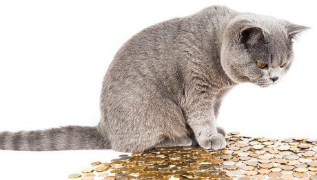 Ile kosztuje kot brytyjski? Cena kupna kota i koszty utrzymania