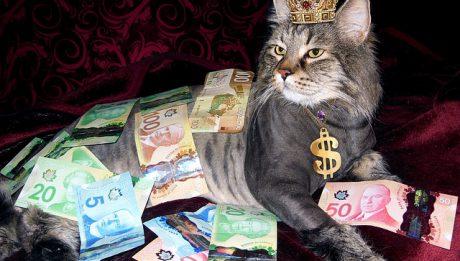 Kto i kiedy nie musi płacić podatków?