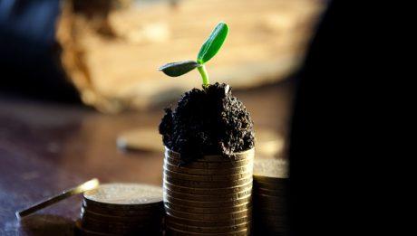 Roślinka rosnąca na pieniądzach