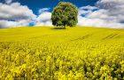 Biopaliwa – czym są, jak są produkowane, gdzie są stosowane?