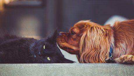 Ile kosztuje ubezpieczenie psa i kota? Kiedy warto wykupić polisę na zwierzęta domowe?