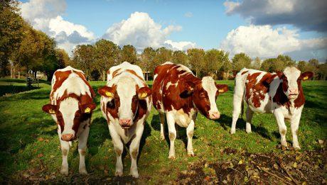 Korupcyjna afera Niesiołowskiego, Nielegalny ubój bydła… – podsumowanie 31 stycznia