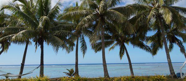 palmy na Wyspach Cooka