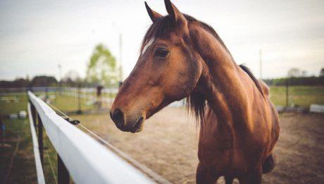 Ile kosztuje ubezpieczenie konia?