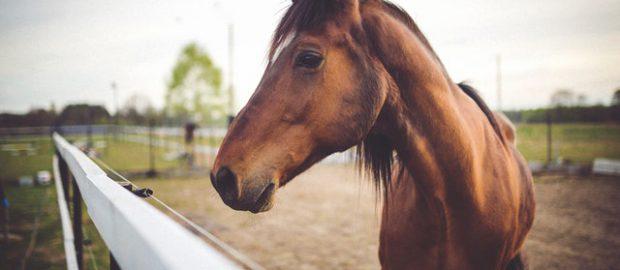 Koń w zagrodzie