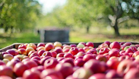 Produkty rolne, Włoski deficyt… – przegląd 5 czerwiec 2019