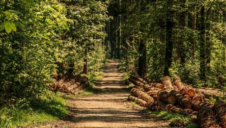 Ile kosztuje hektar lasu? Czy można kupić las?