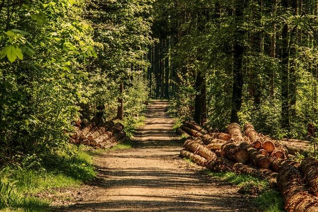 Ile kosztuje hektar lasu? Czy można kupić las? - HotMoney