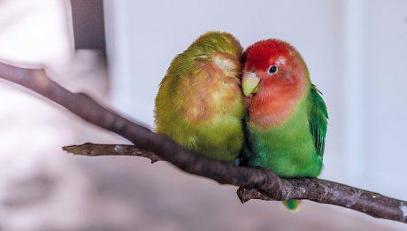 Ile kosztuje papuga? Popularne gatunki papug i ich ceny