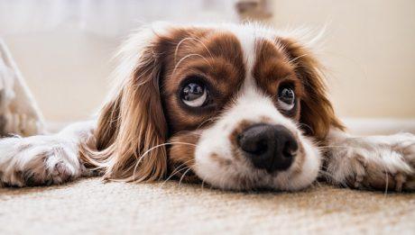 Ile kosztuje kastracja psa? Ceny popularnych usług weterynaryjnych dla psów