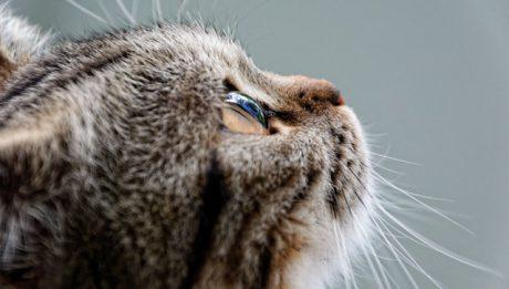 Ile kosztuje sterylizacja kota? Ceny zabiegów dla kota u weterynarza