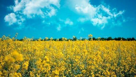 Ustawa o biopaliwach, Przejęcie brytyjskiego tankowca… – przegląd 19 lipiec 2019