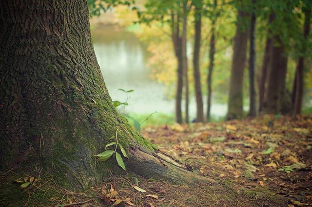 las-czy-mozna-kupic-hektar-lasu