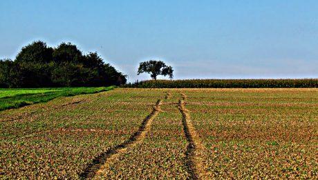 Ile kosztuje 1 ar ziemi na wsi? Ceny ziemi na wsi w różnych regionach Polski