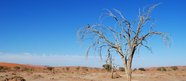 afrykańska susza